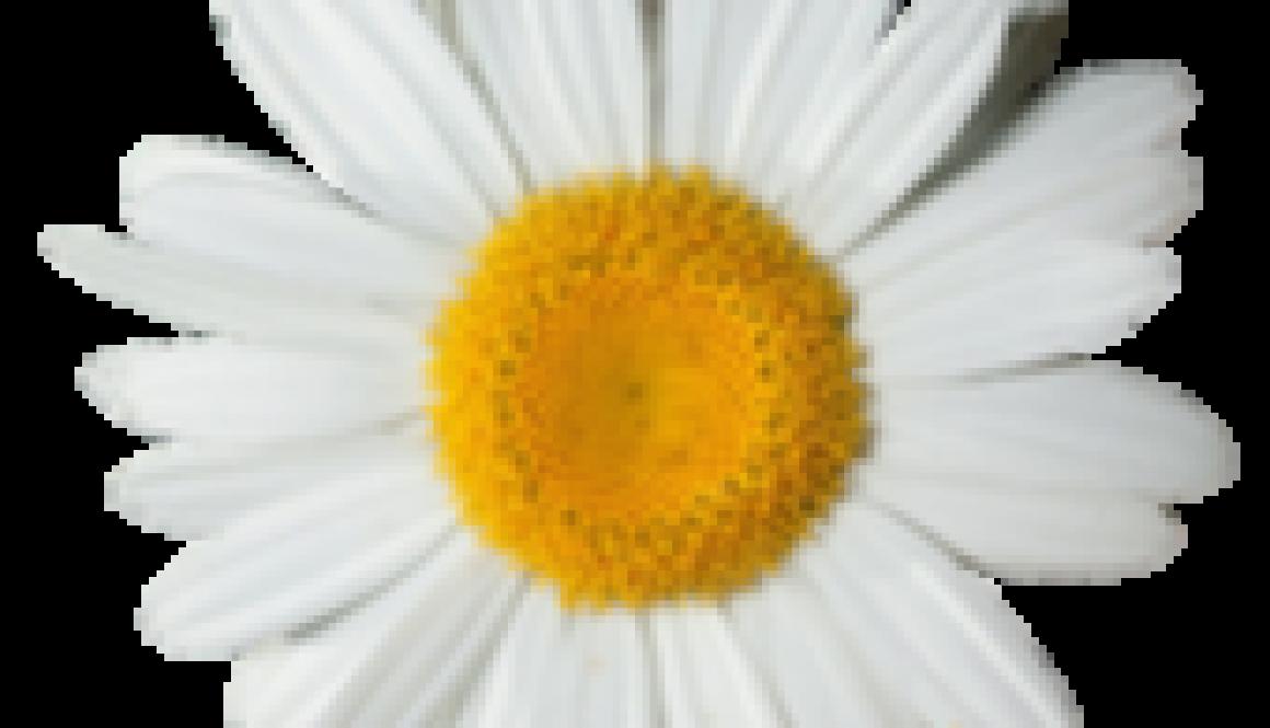 luxeuil les bains fleurs